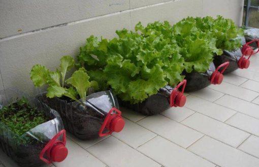أسهل طرق زراعة النباتات و تزيين المنزل بـ10 صور