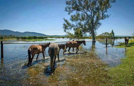 شاهد 17 صورة ساحرة لبحيرة طونغا الجزائرية
